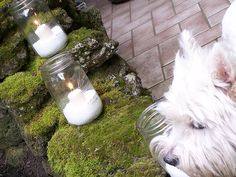 I don't think the dog would quite work for the centerpiece, but the rest of the picture would be quite nice