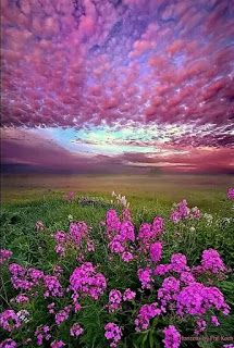 Fields of lavender will make calm my soul in teas, baths, & oils. Thank you Mother Nature. Beautiful Sky, Beautiful Landscapes, Beautiful World, Beautiful Flowers, Beautiful Places, Wonderful Places, Beautiful Nature Photography, All Nature, Amazing Nature