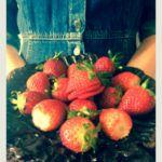 tort de ciocolata cu capsuni Strawberry, Fruit, Strawberry Fruit, Strawberries, Strawberry Plant