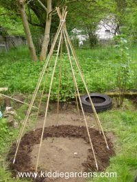 """Tee pee fort planted over bean plants, so they can wind their way up around poles and create a little """"secret garden""""."""