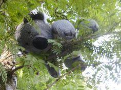 Koala uit 'Gebreide dieren' door Sarah Keen
