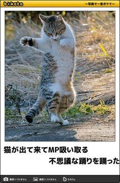 【ボケ】猫が出て来てMP吸い取る 不思議な踊りを踊った。 - ボケて(bokete)