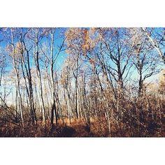 Weaselhead Park, Calgary, Alberta.@Alex Leichtman Chubachi Ontario, Banff, Lake View, Calgary, Instagram Images, Canada, Community, Photo And Video, Park