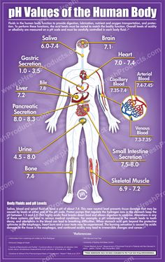 pH Values of the human Body: Fluids in the human body function to provide digestion, lubrication, nutrient and oxygen transportation and protection. To perform these functions, the acid levels must be varied to match the bodily function. Science Biology, Medical Science, Science Education, Life Science, Biology Lessons, Medical Laboratory, Ap Biology, Teaching Biology, Health Education