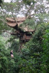 treehousing, northern laos (Gibbon...want to do this!)
