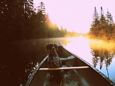 Taken by my father, on Allagash River, of our family dog: Eulalie.