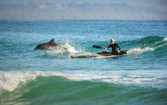 Dolphin and kayaker sharing a wave at Byron Bay NSW AUSTRALIA by Sean O'Shea  semi-finalist in the 2016 Moran Photographic Prize.