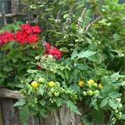 P. Allen Smith on Mixing Ornamental and Edible Plants