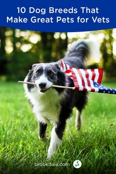 Ten dog breeds that could make great pets for senior veterans. Funny Dogs, Funny Animals, Cute Animals, Crazy Animals, Top 10 Dog Breeds, Dog Anxiety, Dog Care Tips, Free Dogs, Happy Dogs