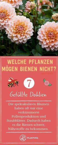Pollen, Dahlias, Table Decorations, Tricks, Gardening, Gardens, Modern Gardens, Garden Design, Flowers