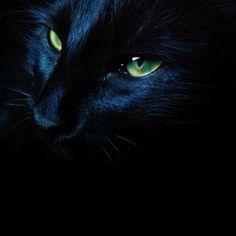 midnight black.... White And Black Cat, Vikings, Kitty, Dark, Animals, The Vikings, Cuddle Cat, Animales, Animaux