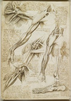 "From DaVinci's anatomical drawings. ""Three studies, one on a larger scale, of a man's right arm and shoulder, showing muscles; three studies of a right arm; a diagram to illustrate pronation and supination of the hand."""