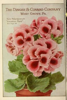 n41_w1150 | Our new guide to rose culture :. West Grove, Pa.… | Flickr - Photo Sharing!