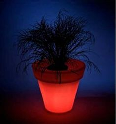 Glowing Planters - The LED Light Pots from Rotoluxe Set Your Garden Aglow (GALLERY)