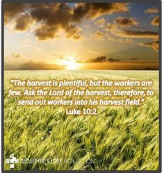 #harvest #true #bounty #big #available #labor #bare #any #people #Christians #need #live #right #preach #tell #share #Gospel #life #example #words #speech #speaker #Bible #help #world #desperate #light #God #Jesus #Christ