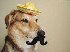 LOL....mexican hat for Mr. Doggy