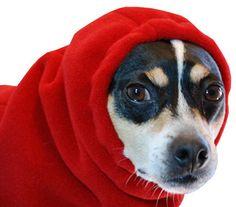 RAT TERRIER Dog Hood. $21.00, via Etsy.