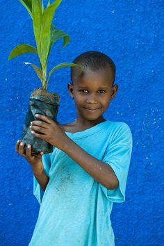 Les planteurs d'arbres de Patrick Wallet