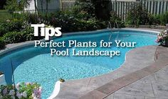 Perfect Plants and Tips for Pool Landscaping