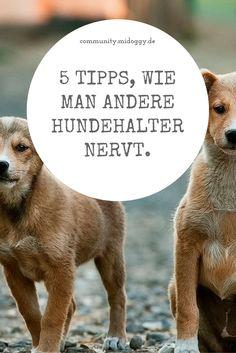 || #Hund || Ideen || #Hunde || Tipps || Tricks || Ideen || Liebe || Welpen || Bilder || #Humor