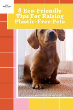 Raising plastic-free zero waste pets Indoor Family Photography, Plastic Free July, Lower Blood Pressure, Personal Goals, Good Wife, Love Can, What Is Like, I Love Dogs, Pet Care