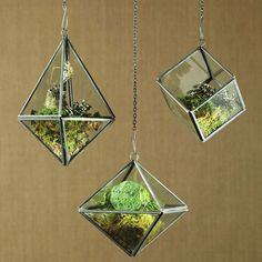 Geometric Terrariums - bring the outside in