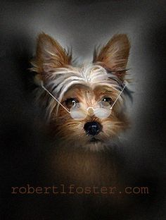 Hey, I found this really awesome Etsy listing at https://www.etsy.com/listing/90404535/yorkie-art-dog-print-near-sighted-yorkie