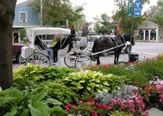 This Canada tour features experiences hand-picked by Audley& Canada specialists to inspire ideas for a tailor-made holiday. New England Cruises, Audley Travel, Visit Toronto, Canada Travel, Canada Trip, Cruise Vacation, Vacation Ideas, Horse And Buggy, Visit Canada