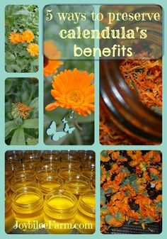 Preserving calendula flowers
