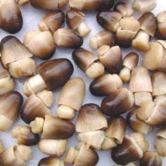 Where i can get a list of related studies about straw mushrooms?