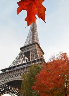 Tara Goes Europe Wandering Paris, France in the fall.