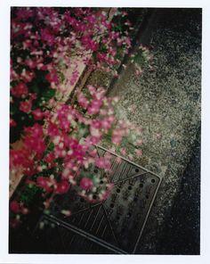 dapple #A by F.Suzuki