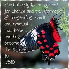 The butterfly is the symbol of change (new beginnings!)