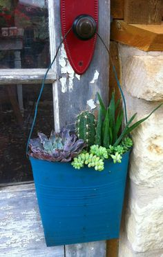 Hang It!  Cactus/Succulents  Ready for Dripping Springs, Tx. Farmers Market
