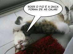 Facebook Cãomix da Alice e Companhia