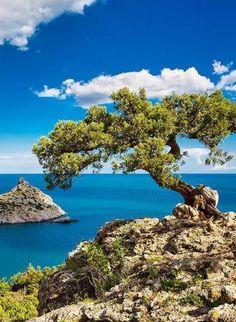 Crimea , S Ukraine , from Iryna