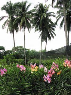 Philippine Orchid Farm