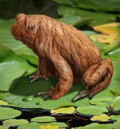 """A hoax but awesome anyway! """"Siberian Long Haired Frog"""" - this is a hoax, but there is a Hairy Frog native… Bizarre Animals, Unusual Animals, Rare Animals, Animals And Pets, Funny Animals, Interesting Animals, Reptiles And Amphibians, Mammals, Beautiful Creatures"""
