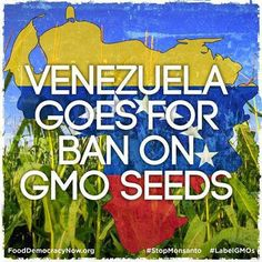 Venezuela is currently in the process of crafting legislation to bar transgenic seeds and crops from entering the country, while biotechnology giant Monsanto has completely withdrawn all of its business efforts from the European nation of Denmark, where food companies and the genera public have wholly rejected GMOs. http://www.naturalnews.com/040841_GM_seeds_Monsanto_global_agriculture.html
