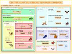 La NOUVELLE classification des animaux