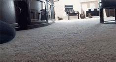 Dog sliding into home How do you teach your dog to do this???