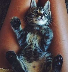 Kittie x Pinterest: @lauraemeny