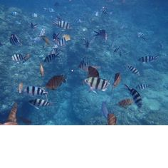 colorful fish#5