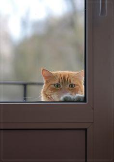 - Laisse-moua rentreeeer ! - Mais tu viens de sortir !?! - Oui mais j'veux rentreeeer ! - Bon bon d'accord ! *ouvre la porte* Làààà, tu es content ? -*hésite* biiiin... - QUOI ? - là j'crois qu'j'veux ressortir...