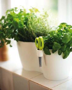 macetas de plantas aromáticas con tijeras incorporadas