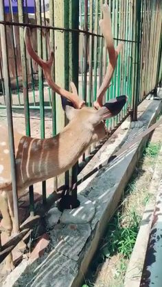 For animated gifs and similar formats, that get better the longer you watch them. Cute Animal Videos, Funny Animal Pictures, Cute Funny Animals, Cute Creatures, Beautiful Creatures, Animals Beautiful, Animals Of The World, Animals And Pets, Baby Animals