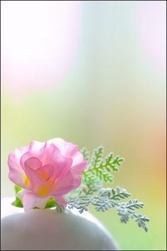 ♀ Bokeh photography Amazing nature still life pink flower