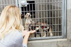 Photo Diary: A Day at the Shelter with Wags and Walks   Lauren Conrad