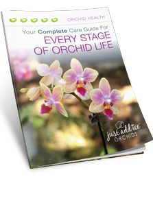 Download the Orchid Care Guide