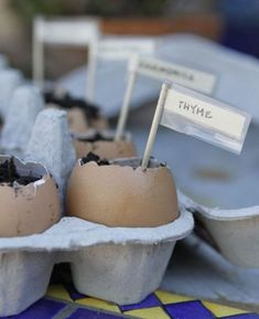 When the seedlings are ready for planting, just gently crush the eggshell, and place it in the dirt.